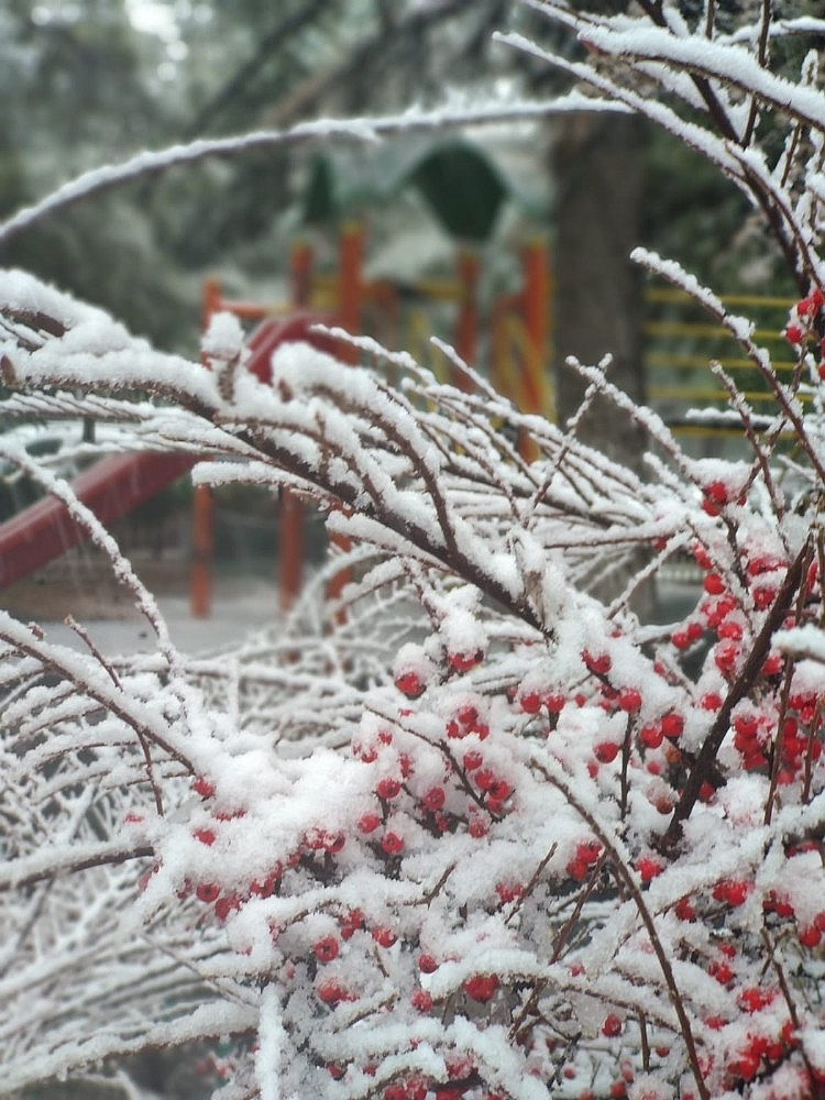 2021/01/konyada-kar-yagisi-sevinci-20210113AW21-6.jpg