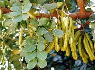 2021/02/aromatik-bitki-uretimine-yuzde-75-destek-20210223AW25-1.jpg