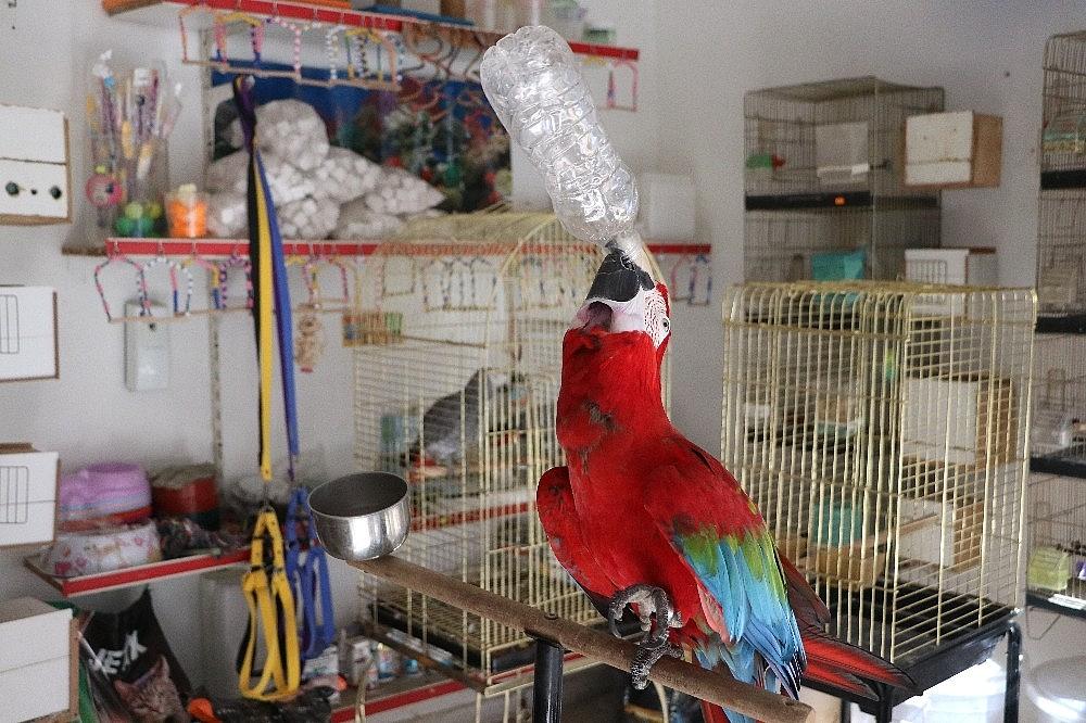 2021/03/bu-papagan-insan-gibi-su-iciyor-muzik-duyunca-oynuyor-20210304AW25-1.jpg