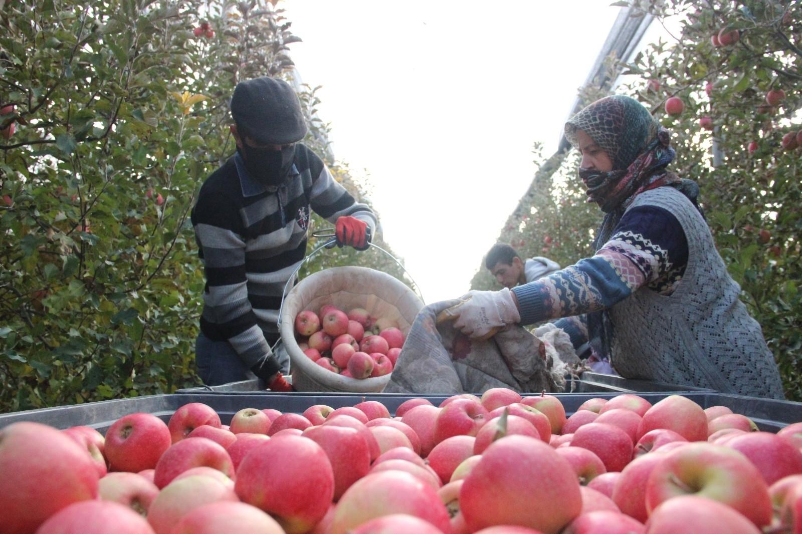 2021/09/karamanda-gunluk-13-bin-kisi-elma-toplamaya-gidiyor-20210915AW41-1.jpg