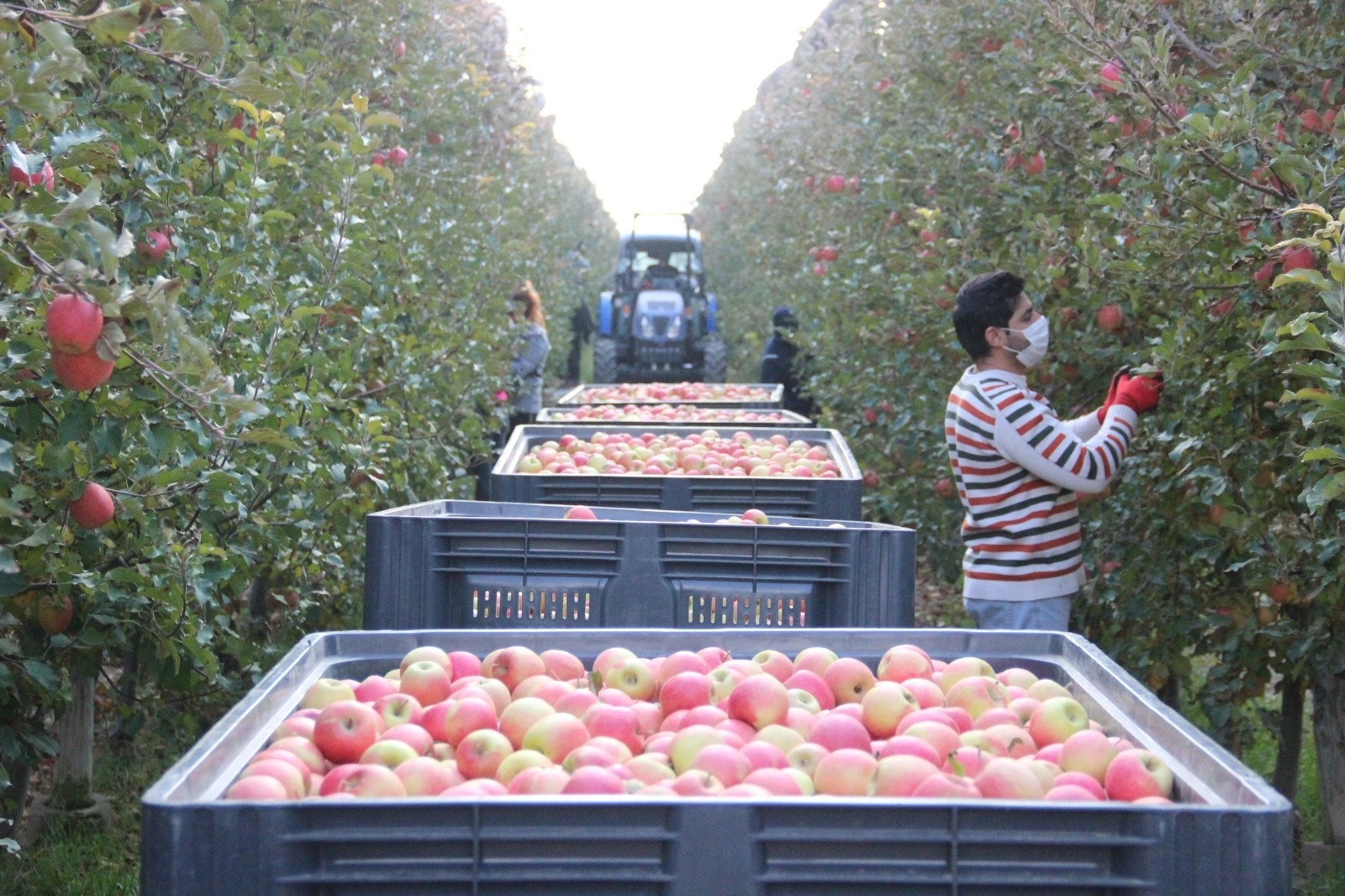 2021/09/karamanda-gunluk-13-bin-kisi-elma-toplamaya-gidiyor-20210915AW41-3.jpg