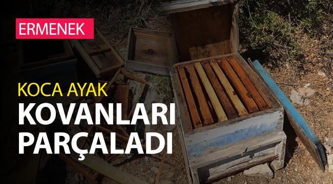 Ermenek'te Ayı 15 arı kovanını parçaladı