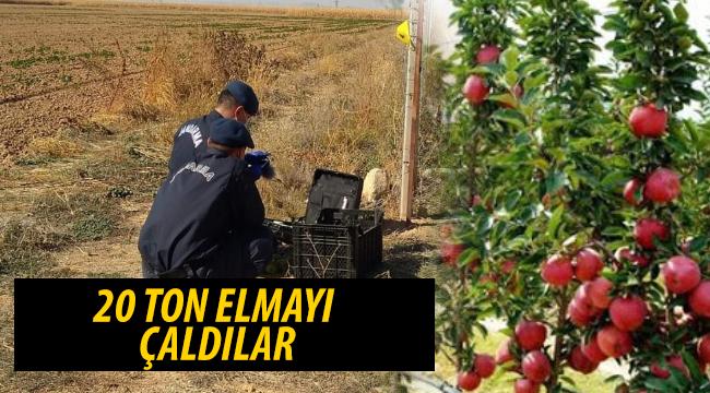 Karaman'da Bahçeden Elma Hırsızlığı