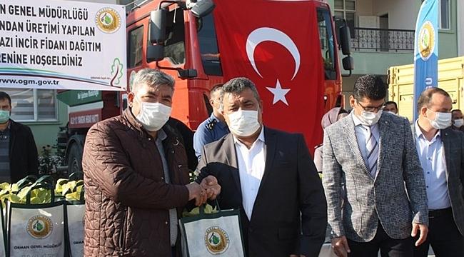 Mut'ta 13 mahalleye 15 bin beyaz incir fidanı dağıtıldı