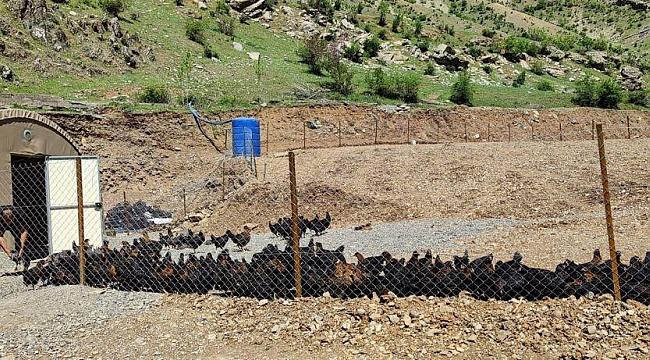 """Bakan Soylu: """"Bir zamanlar teröristlerin gezdiği Hanke Dağı'nda artık, tavuklar geziyor"""""""